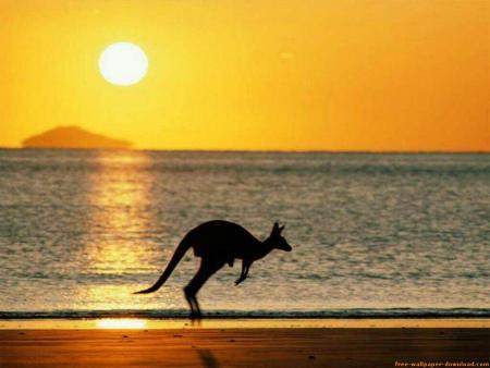 canguro en la playajpg