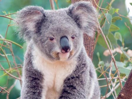 koala_ _smilejpg
