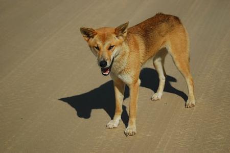 australian desert animals 6jpg