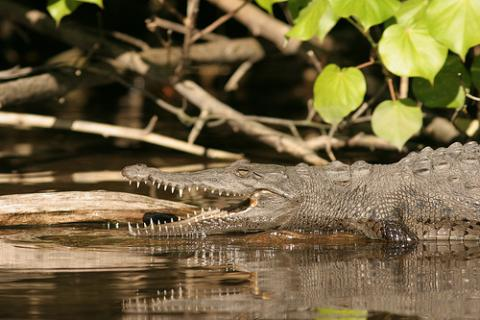 cocodrilos-australia.jpg