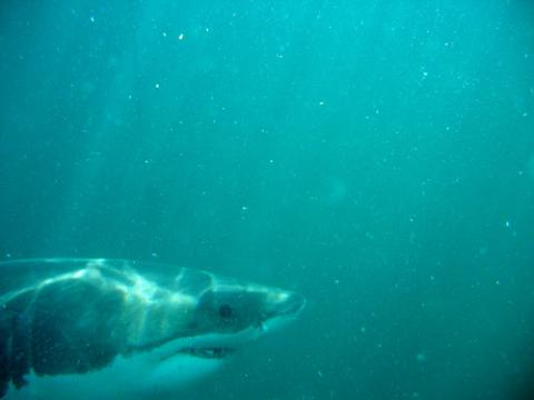tiburon-australia.jpg