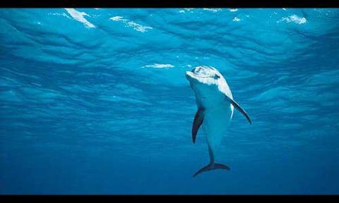delfines-australia.jpg